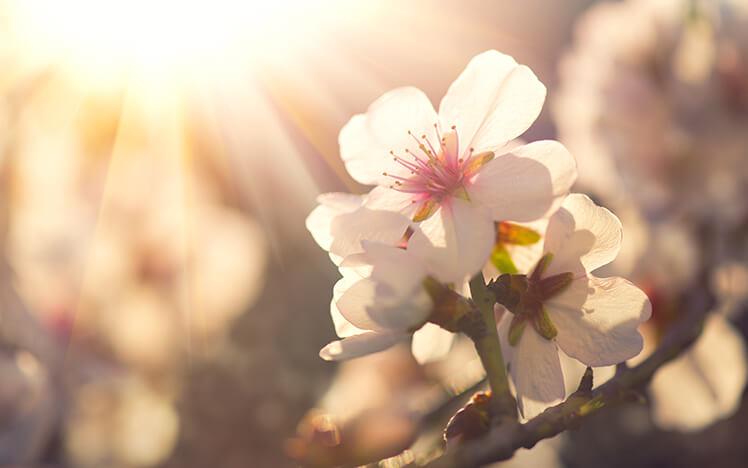 Пролетта предизвика мигрена