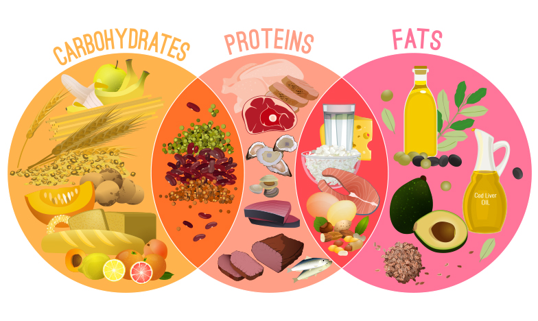 Основни групи храни, макронутриенти