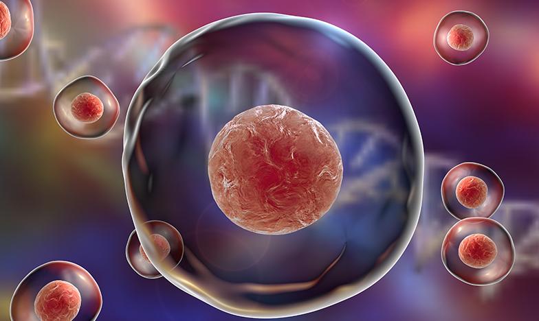Атопичният дерматит се лекува от клетката